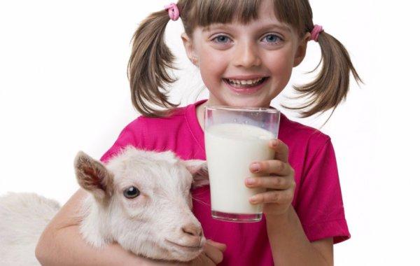 Как пить козье молоко в лечебных целях