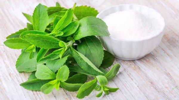 Трава стевия: польза и вред лечебные свойства