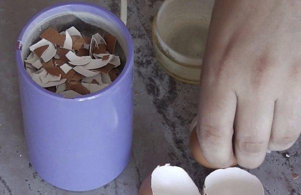 Яичная скорлупа польза для беременных 59