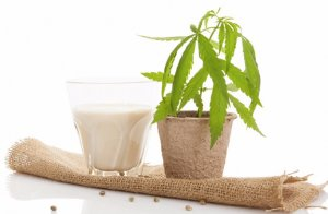 Конопля и молоко цена марихуаны за 1 гр