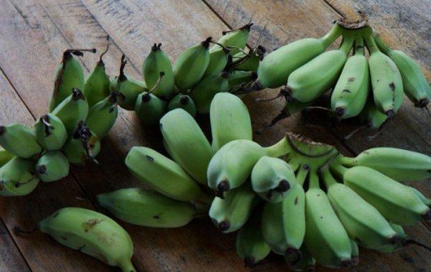 Бананы — польза и вред, химический состав, калорийность, сорта