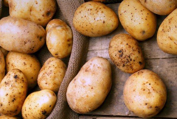 Противоречивый картофель: все о пользе и вреде любимого овоща
