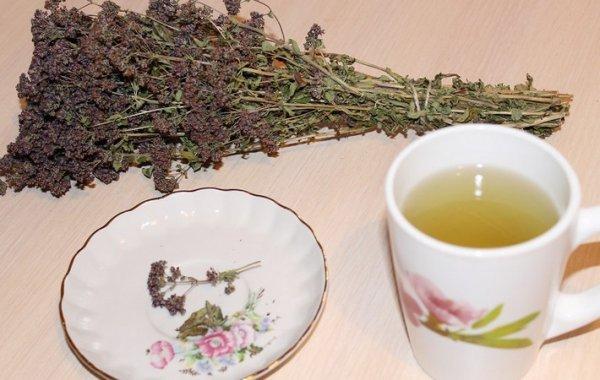 можно пить чай с душицей беременным