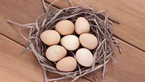 Полезные свойства яиц цесарки и применение