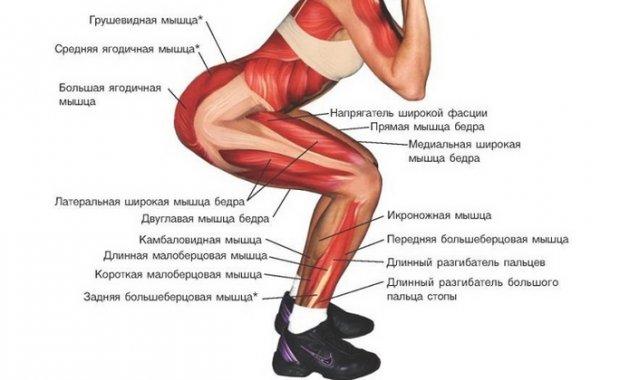 Работа мышц и суставов гимнастика для суставов и позвоночника по норбекову скачать бесплатно