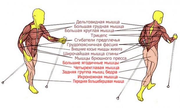 какие мышцы работают при ходьбе фото календарей