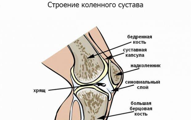 Специальные упражнения при артрозе левого коленного сустава по 2 режиму американский лаконос рецепты суставы