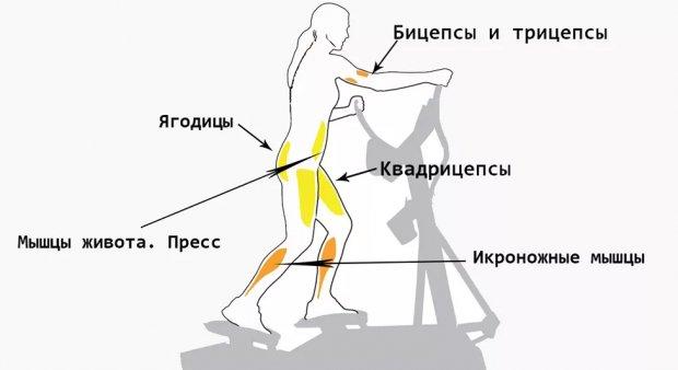 Какие мышцы работат на велотренажёре