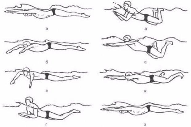 Положение тела при плавании брассом