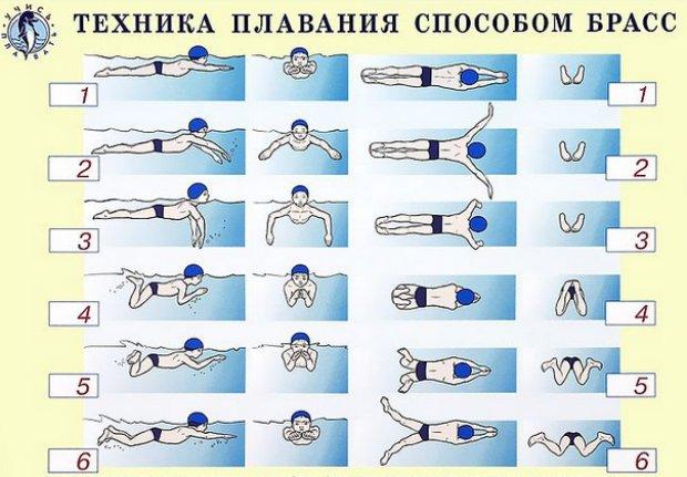 Техника плавания брасс