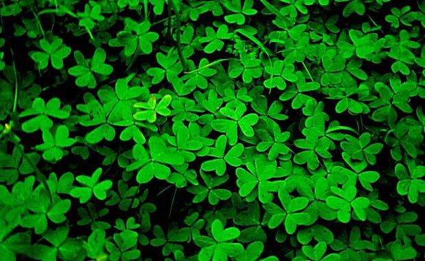 Кто очень любит зеленый цвет