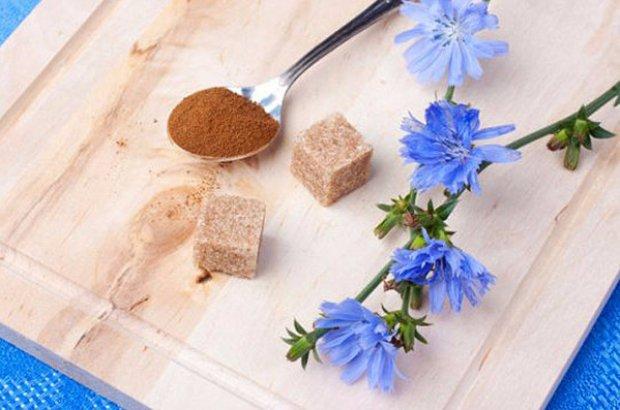 полезные свойства растения цикория