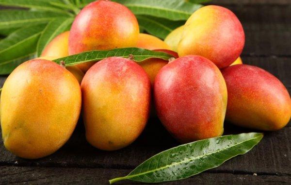 года наша манго польза и вред для организма распространенный вариант