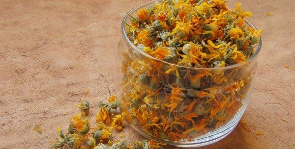 Цветки календулы польза и вред